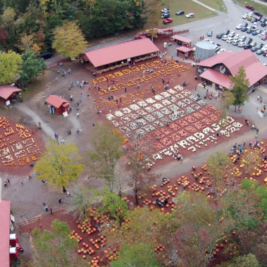 aerial photography pumpkins